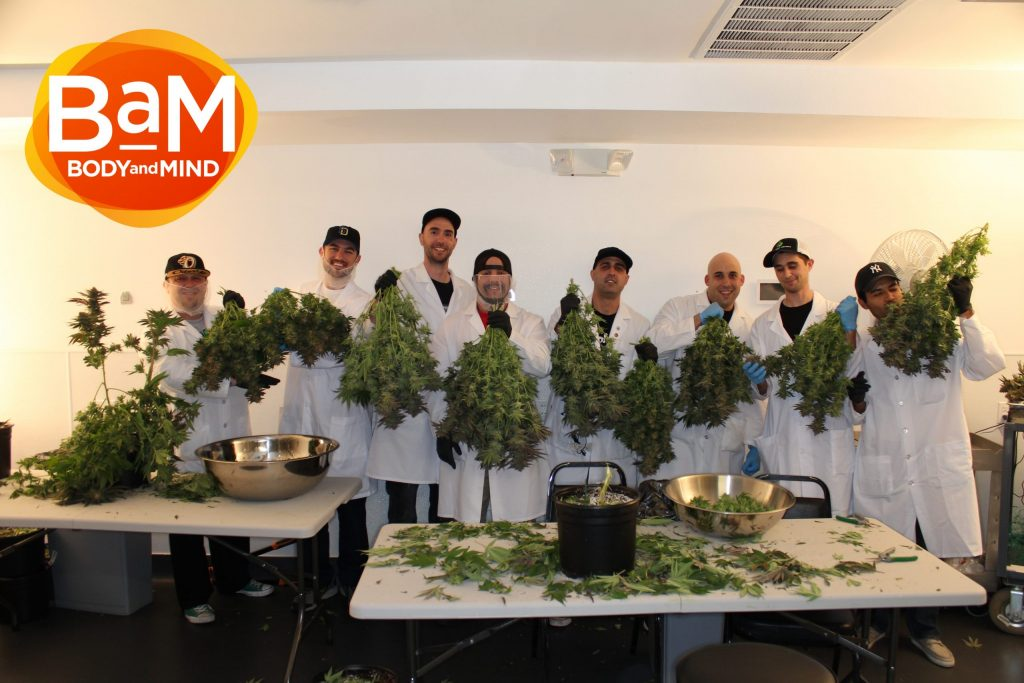 About BaM Cannabis, About BaM